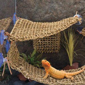 bearded-dragon-reptile-lounger