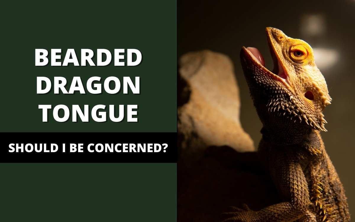 bearded_dragon_tongue_banner