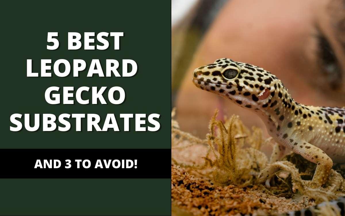 best-leopard-gecko-substrates-banner