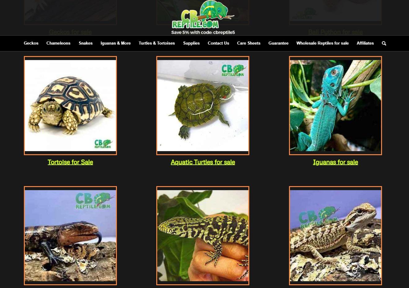 cb-reptile-beardie-breeder-site-screenshot