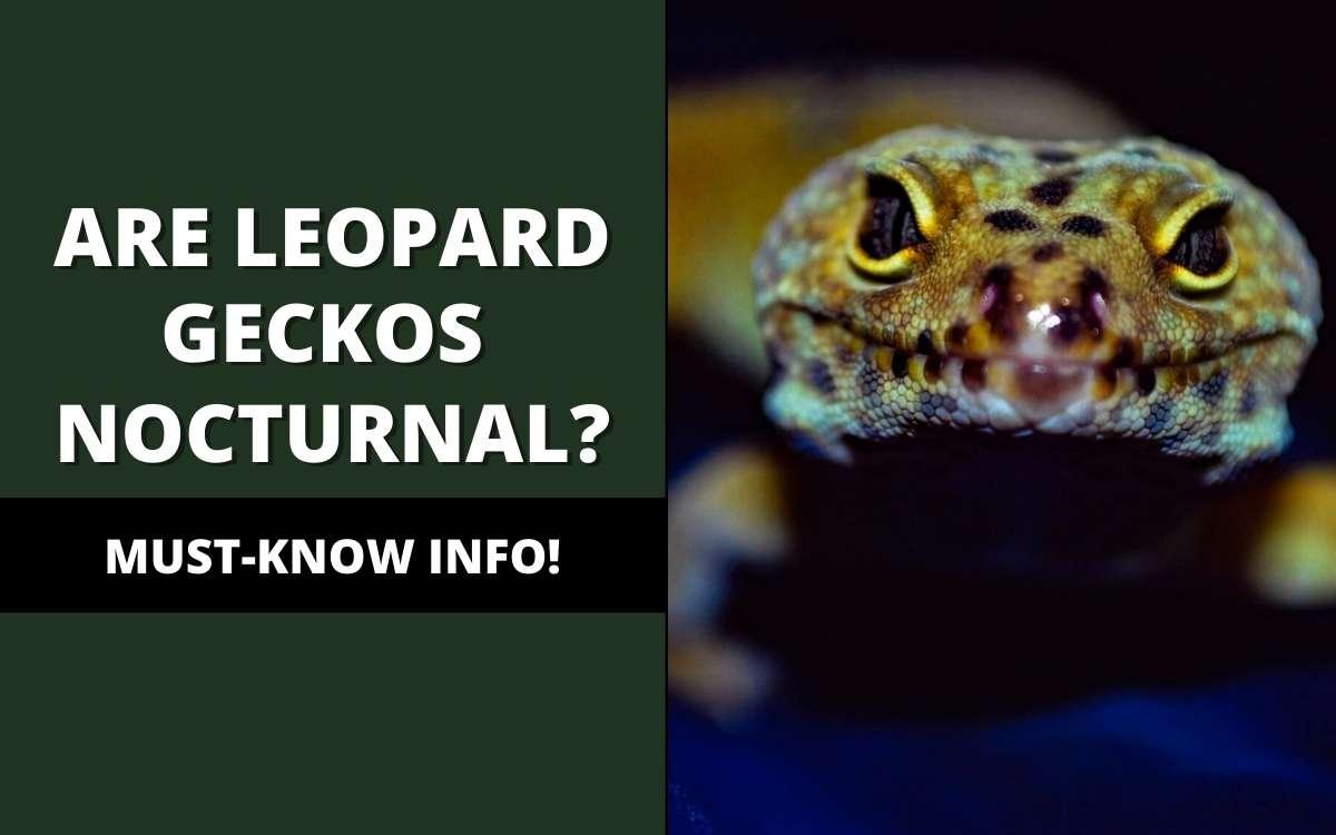 are leopard geckos nocturnal