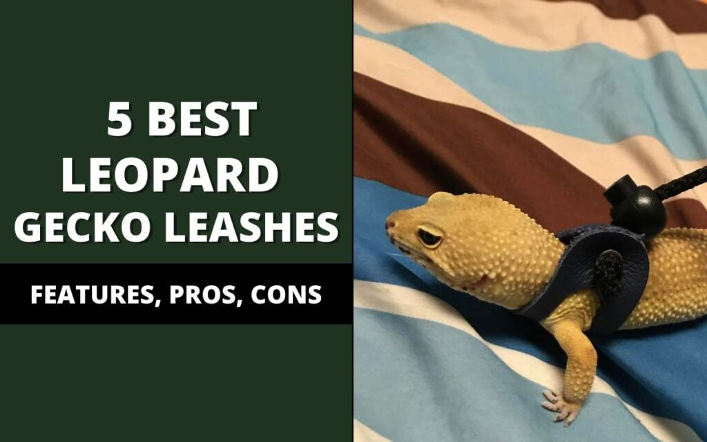 best leopard gecko leashes