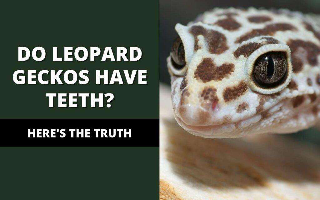 leopard geckos have teeth