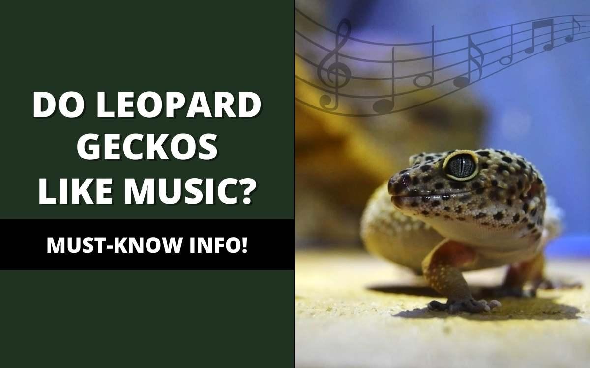 do leopard geckos like music