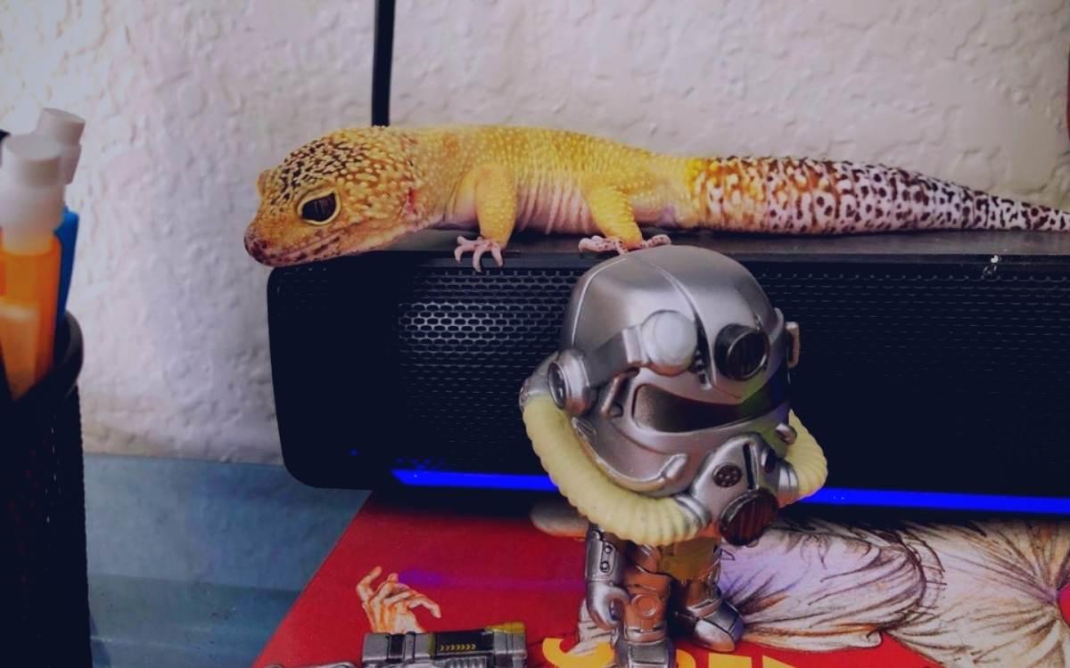 leopard-gecko-listening-to-music