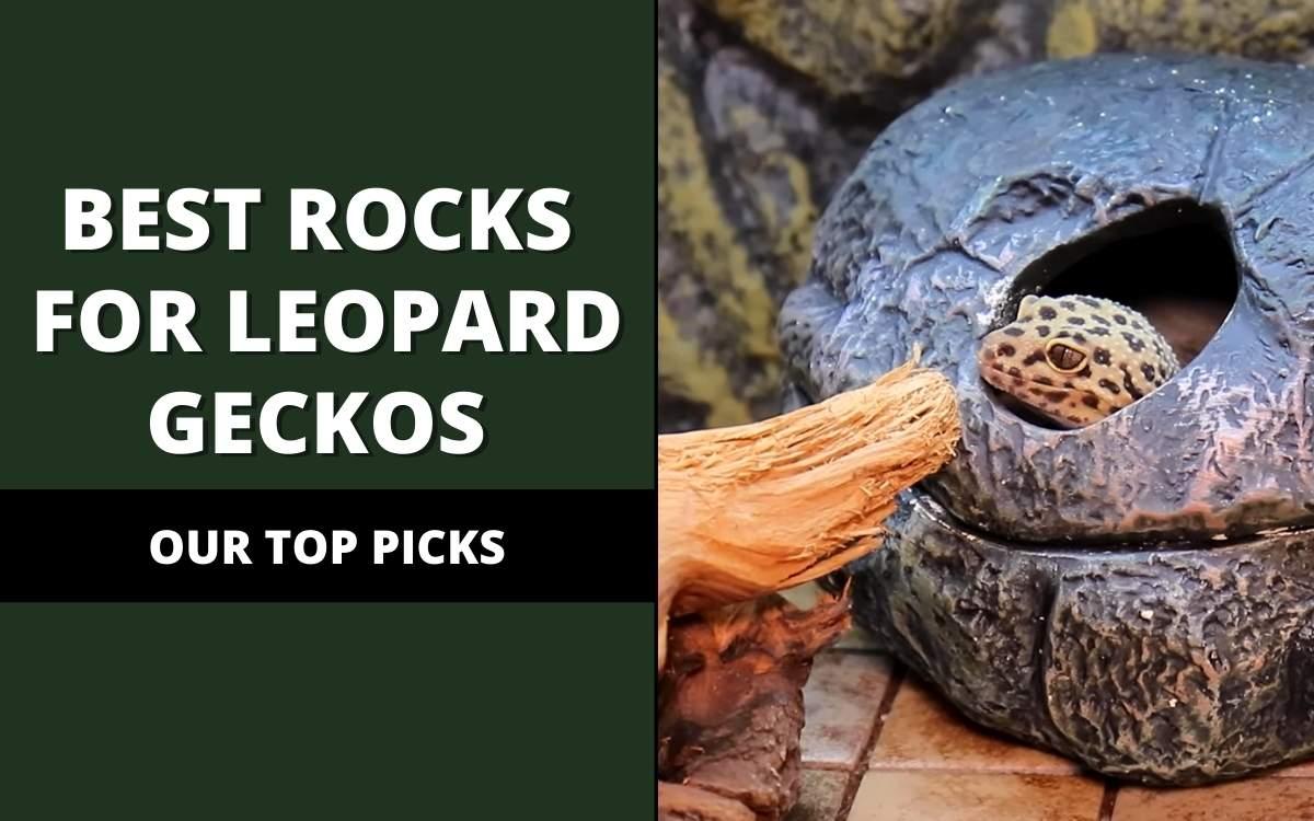 best rocks for leopard geckos
