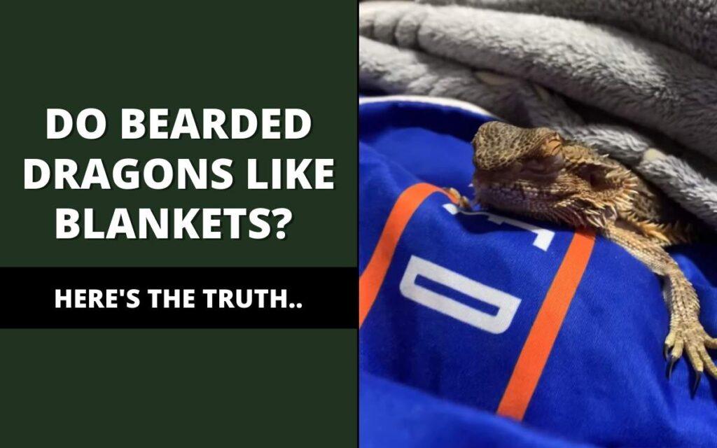 do bearded dragons like blankets