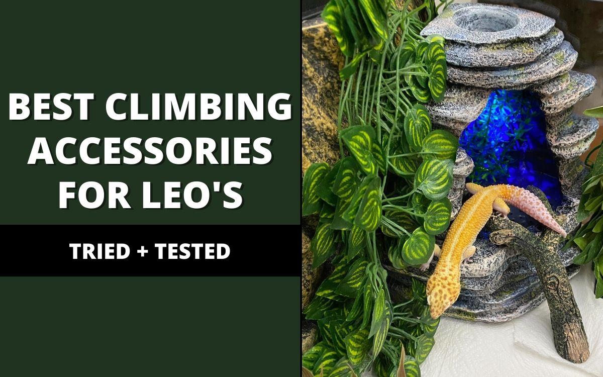 best climbing accessories for leopard geckos