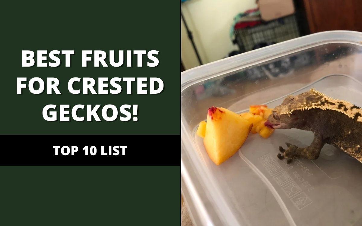 best fruits for crested geckos