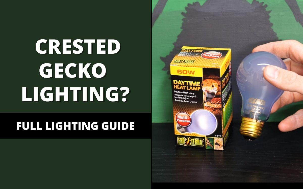 crested gecko lighting