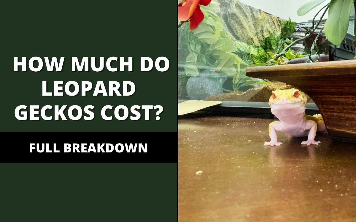 how much do leopard geckos cost