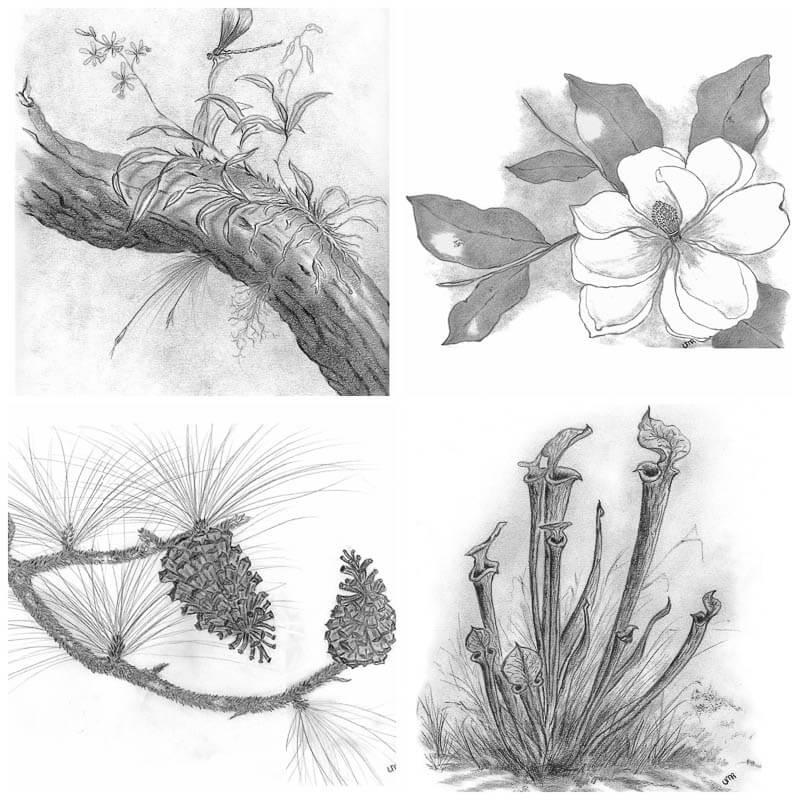 8 notecards_nature prints