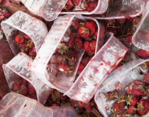 Rotten strawberries on the landfill