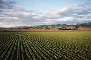 Farm producing produce near animal production