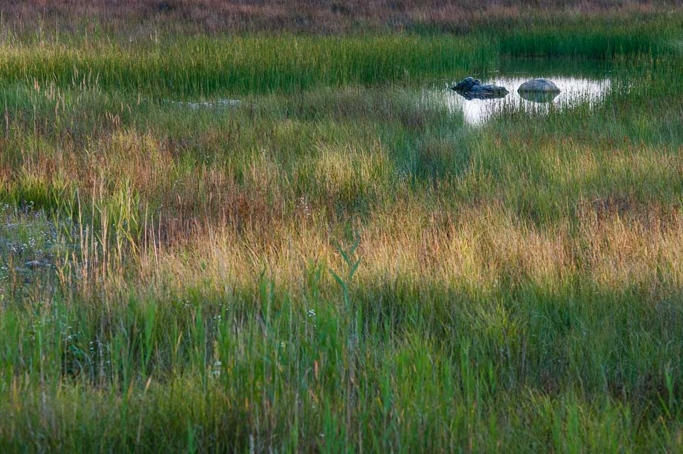 grasses-rocks-and-water-drummond-island