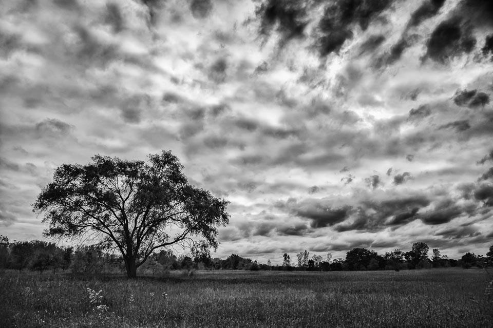 tree-dramatic-clouds