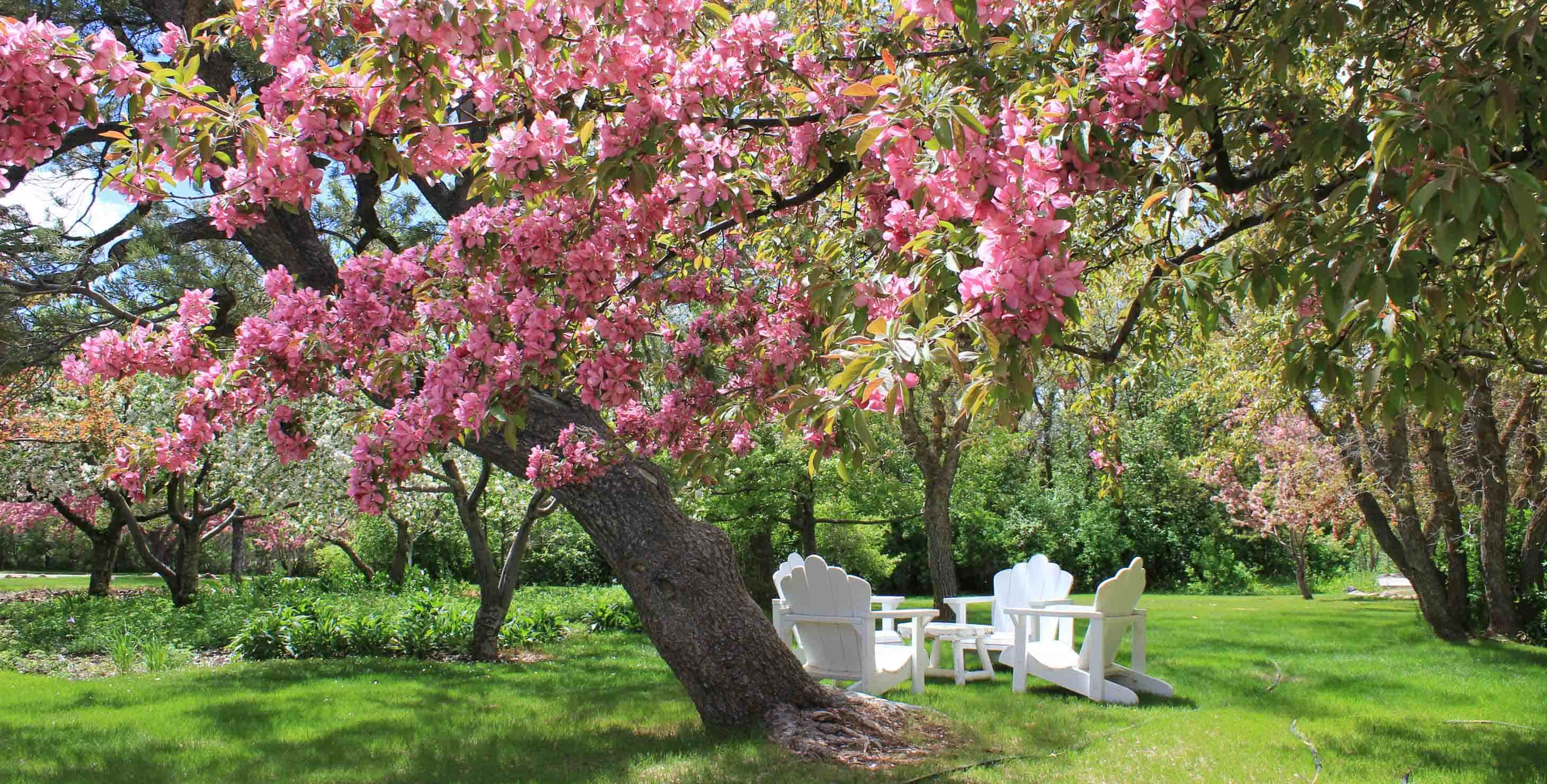 Private secluded lawn with trees in spring bloom