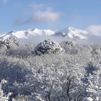 Snow-capped mountains with flocked treees in the foreground.