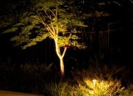 Magnolia Lawn