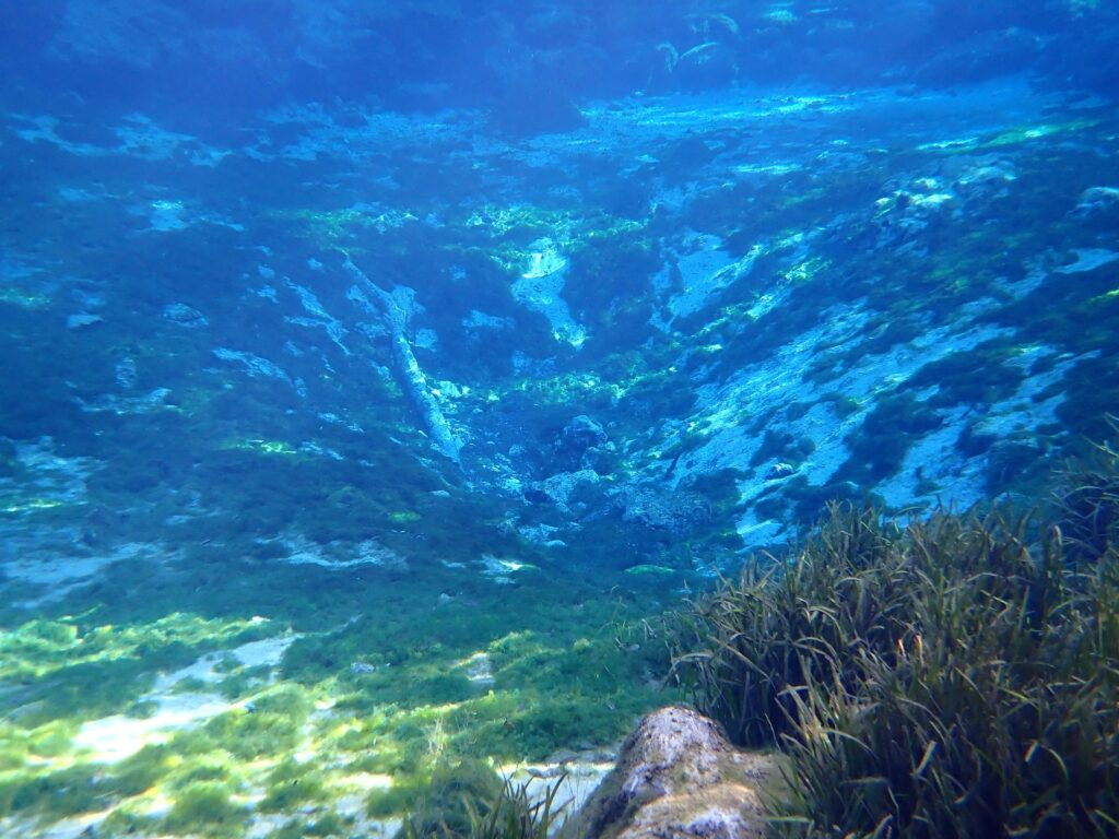 This image shows one of the springs at Three Sisters Springs underwater.