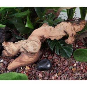 fluval mopani driftwood medium beauty w h