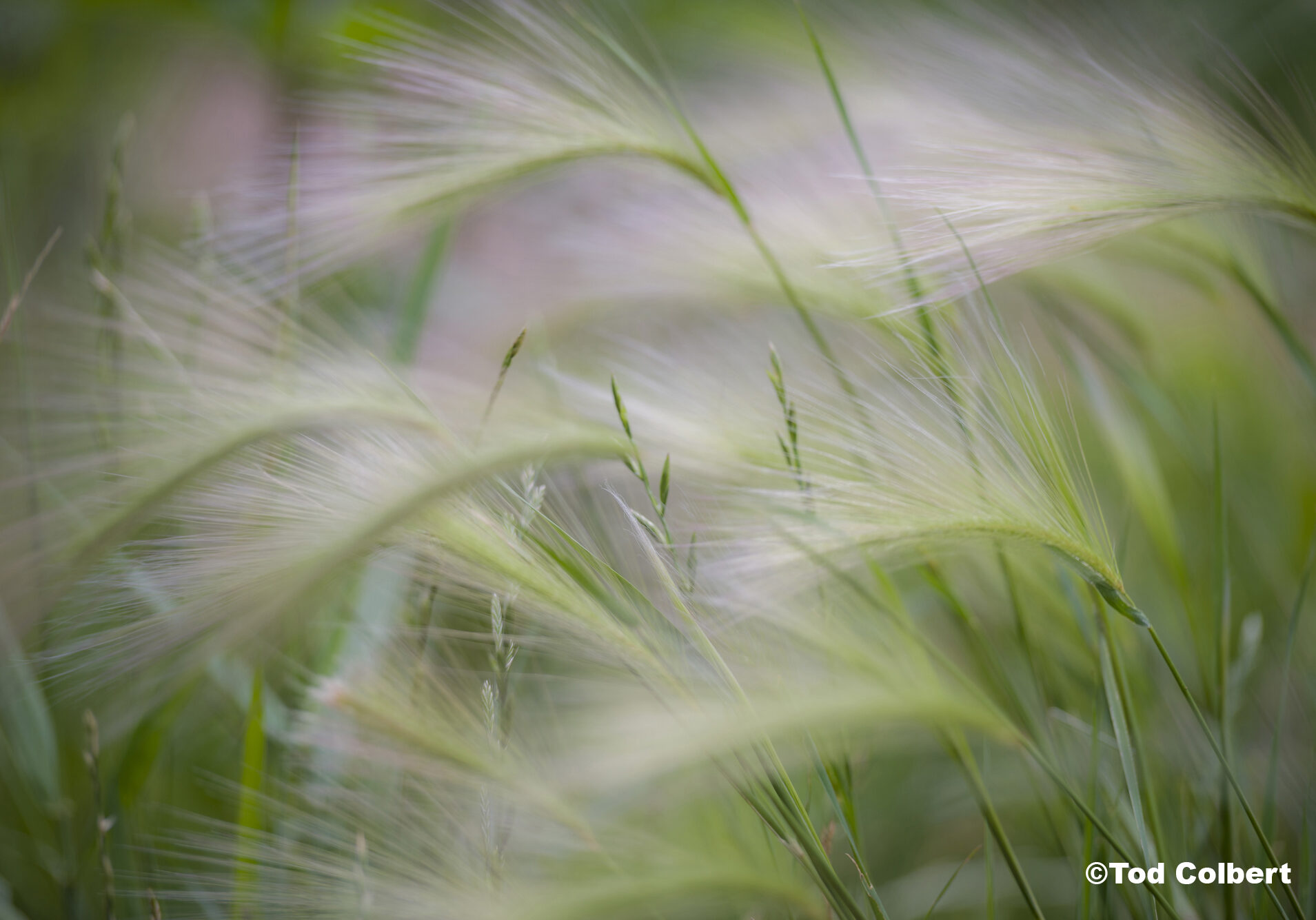 Tall grasses blowing in the wind