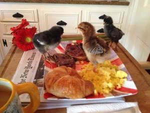chicksonfood