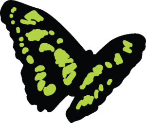 Butterfly, a symbol of a new beginning for the Stay On Your Path life coaching method