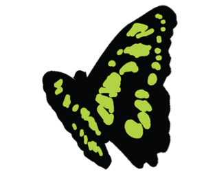 Butterfly, a symbol for stay on your path, your accountability partner training method