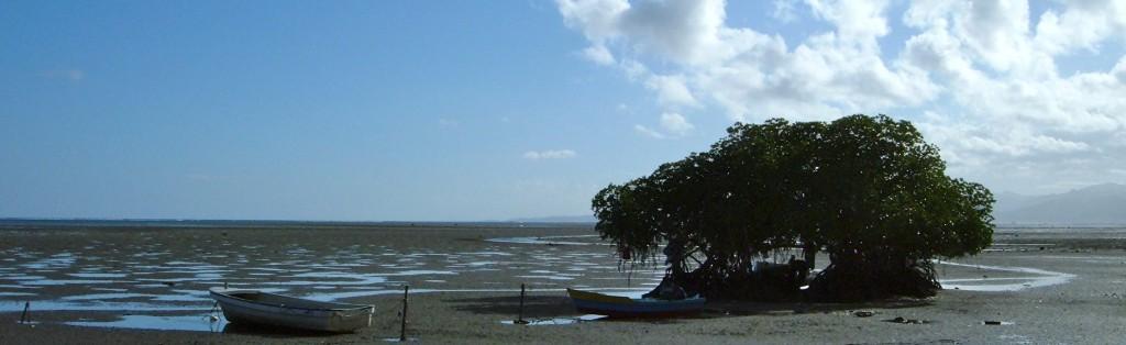 Fiji Mangroves Coastal Christmas