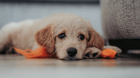 get rid of dog hair and pet odor - Pet friendly cleaning company Magnolia TX