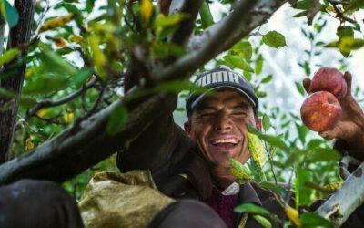Programa de Asistencia Para Proteger a los Campesinos Durante la Pandemia