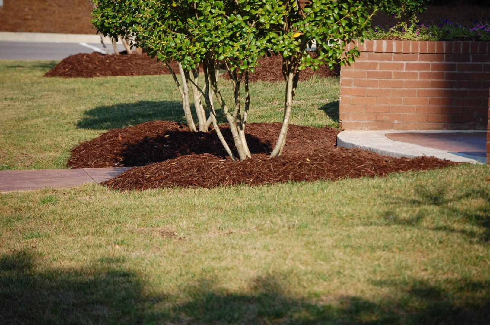 Mulch-trees