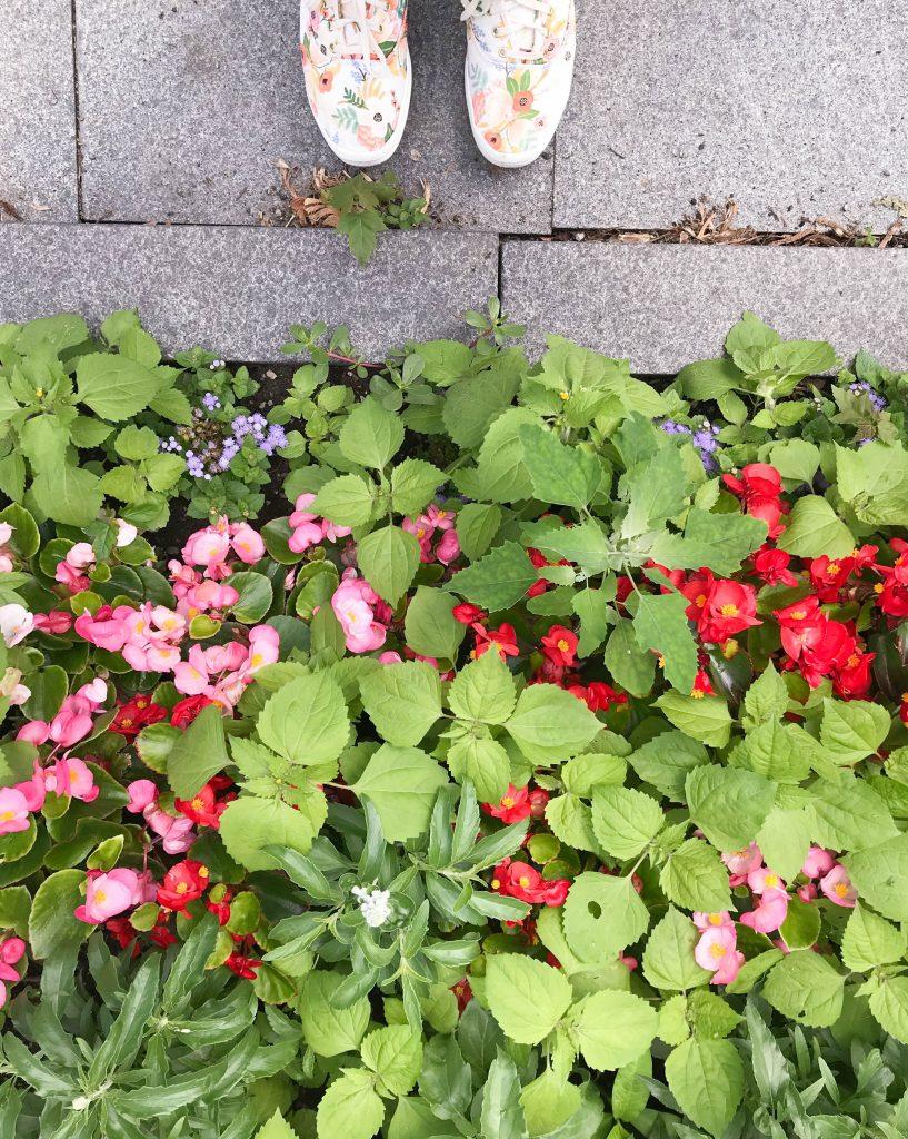 Flores en universidad  de Toronto