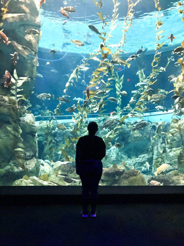 Ripley´s Aquarium
