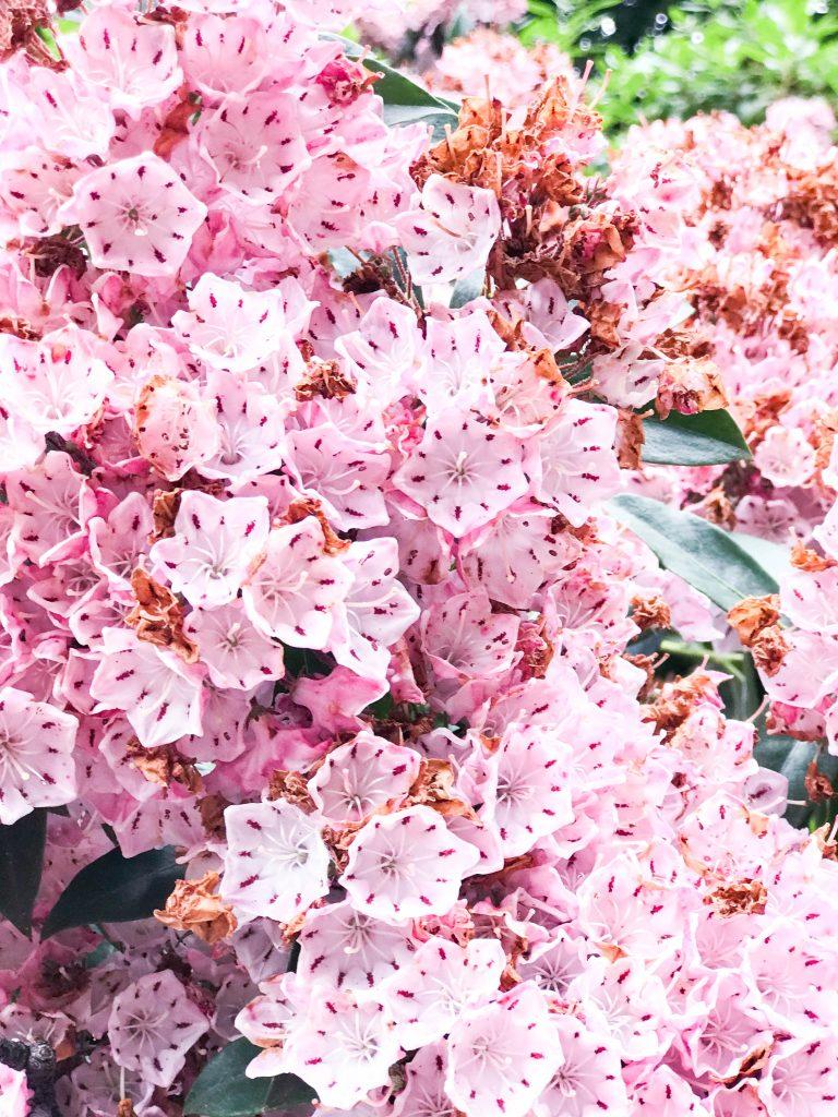 Casa Loma flowers