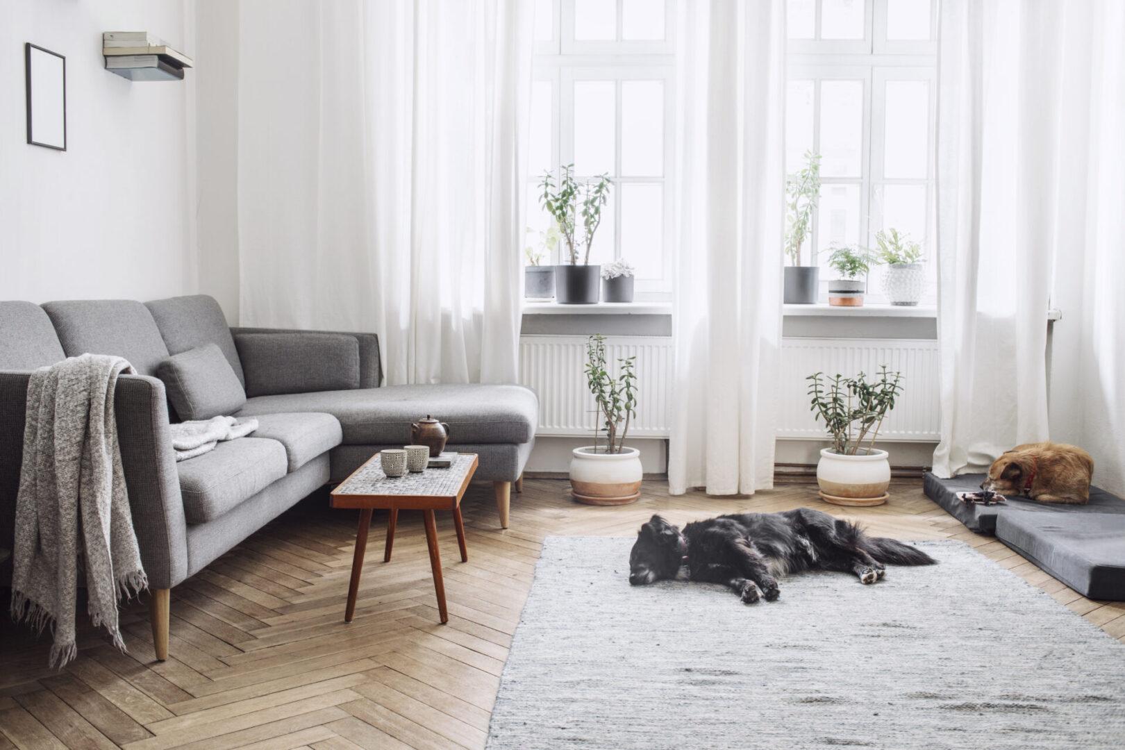 Dog Sleeping on floor pic