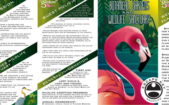 Brochure Design and Illustration