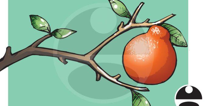 Orange Branch Illustration