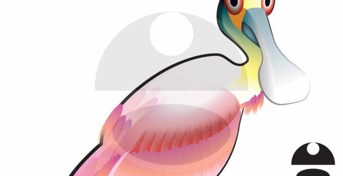 Illustration of a Spoonbill