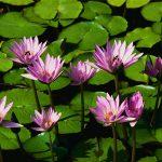 flowering, bursting with life