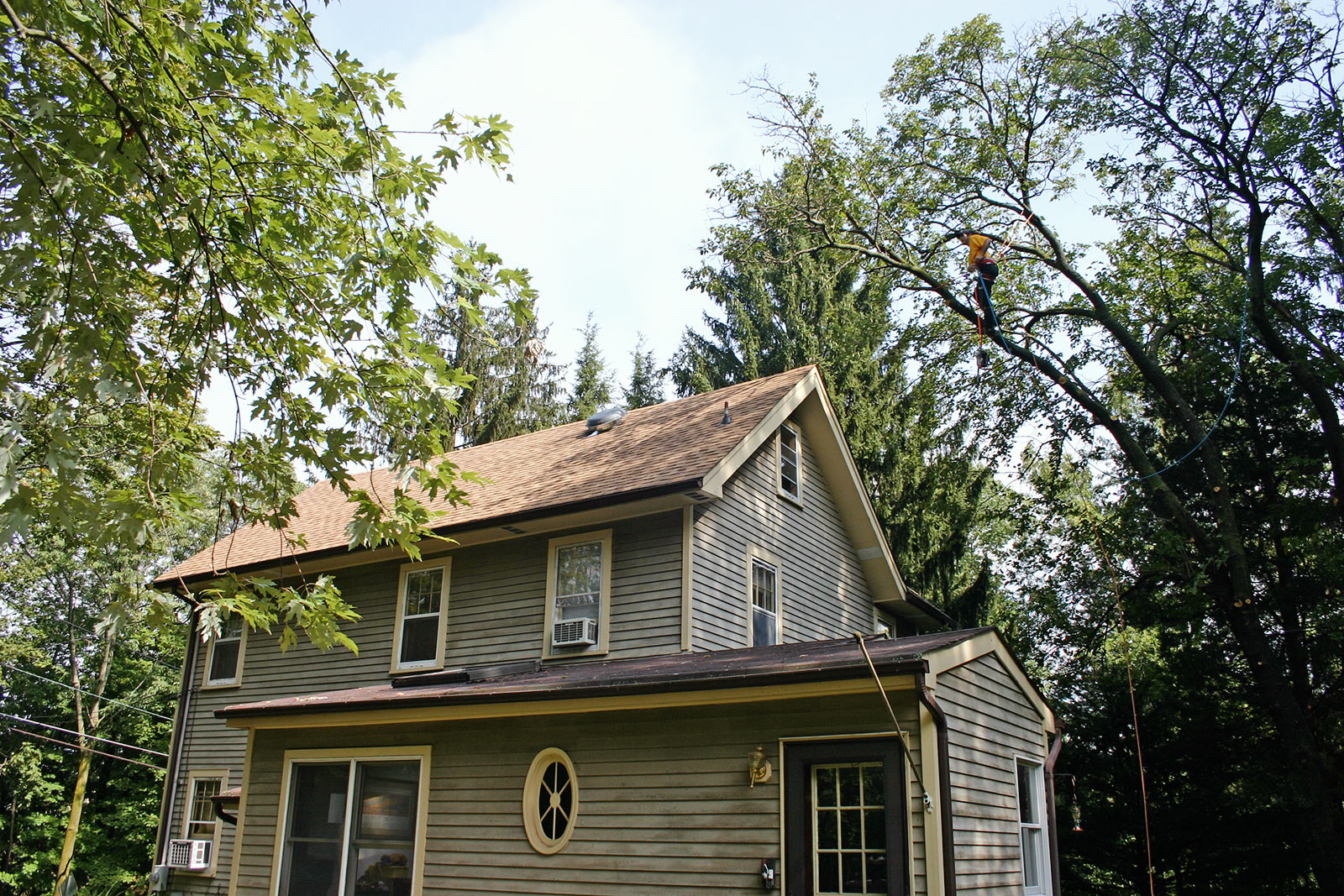 tree-removal-services-nj