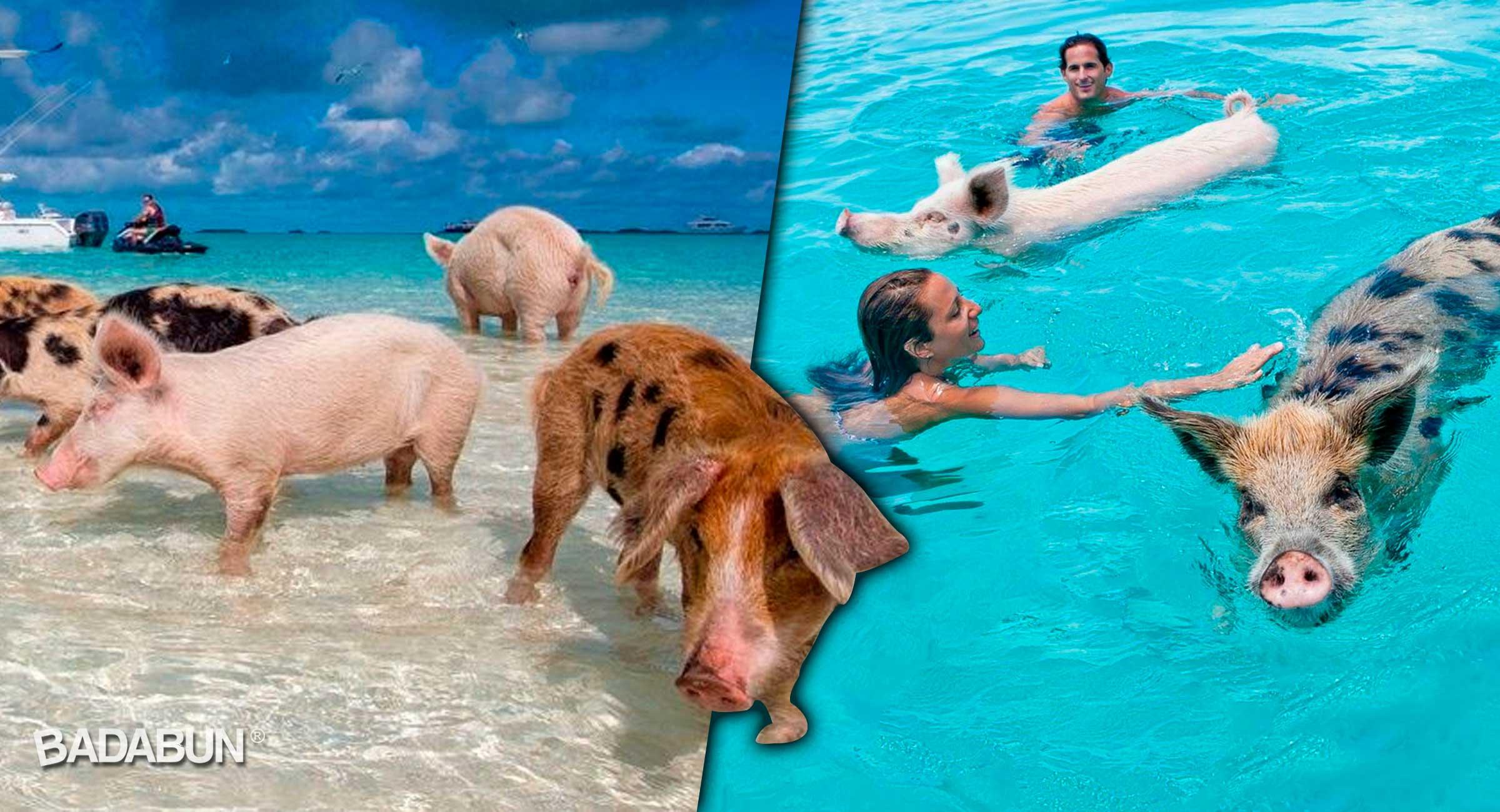 portada-nadar-con-cochinitos