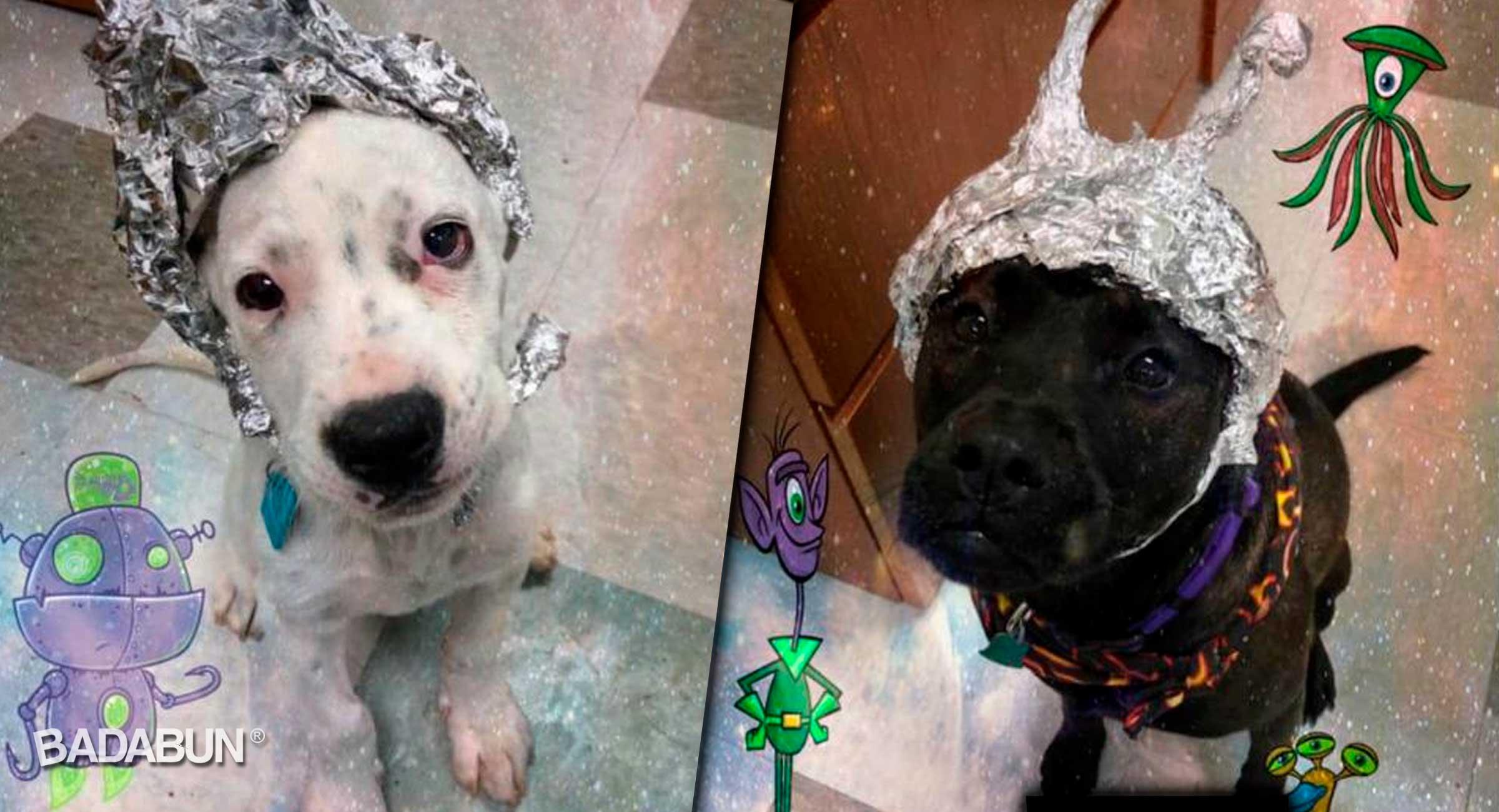 portada-perros-adoptados-como-aliens