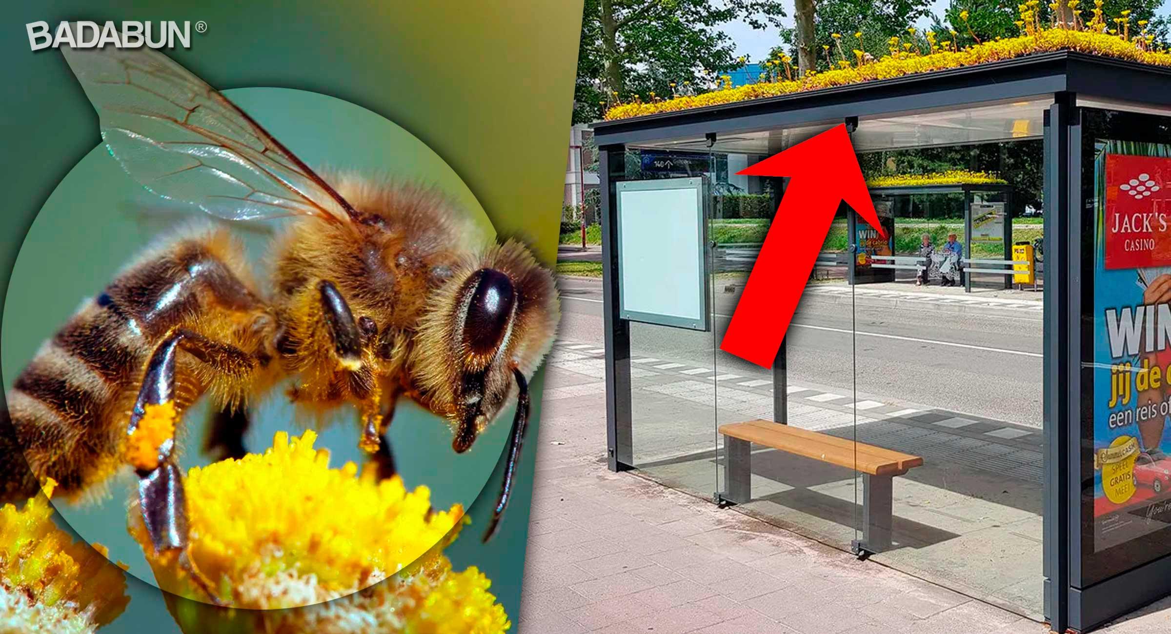 portada-abejas