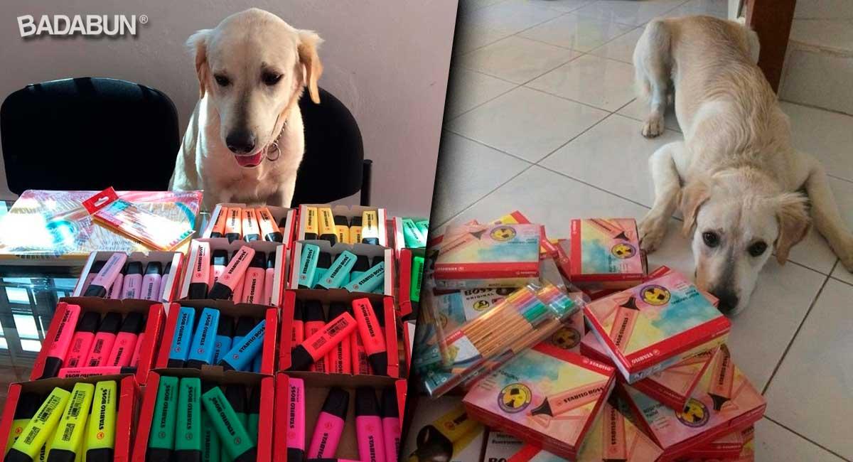 perro-vende-productos-para-su-operacion-1