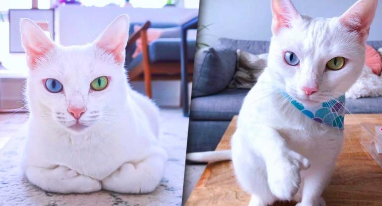gato-ojos-de-color-wordpress3