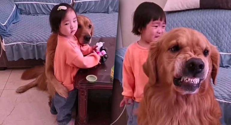 perrito-defiende-a-niña-wordpress2
