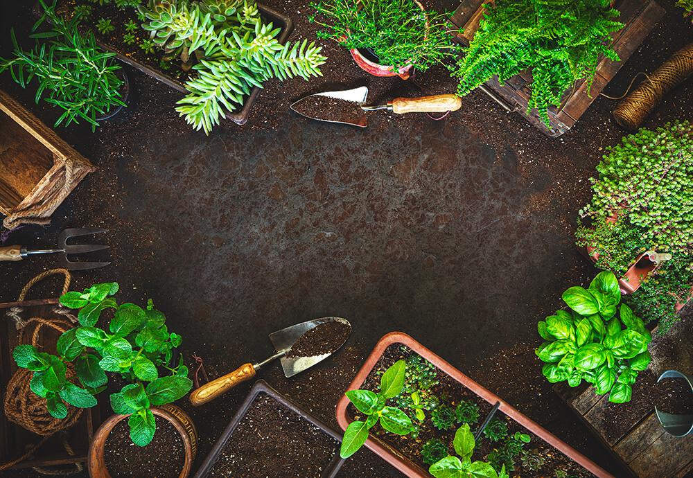 Spring Garden Ideas for Full-Time RVers