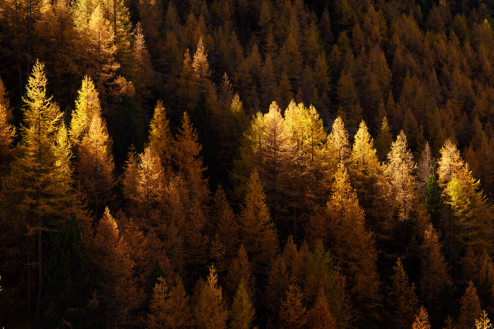 RVing with the larches this fall